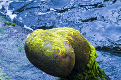 Gravel covered with alga Stock Images