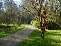 A gravel driveway lined with Crape Myrtle trees and Azalea bushes Stock Images