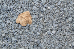 Gravel and dry leaf Royalty Free Stock Images
