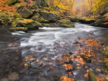 Gravel with fallen leaves. Autumn mountain river banks. Gravel and fresh green mossy boulders on banks with colorful leaves. Stock Photography