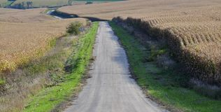 Gravel farm road between two corn fields ready for harvesting Royalty Free Stock Photography
