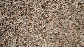 Gravel floor. Cookies textures stones chip royalty free stock images