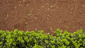 Gravel, maple seeds and plants. Red gravel, maple seeds and green plants Royalty Free Stock Image