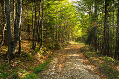 Gravel Mountain Road Thru Forest At Bobija Mountain