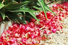 A gravel path in the garden, Aloe vera and Bougainvillea. A gravel path in the garden next to Aloe vera bush and red flowers of Bougainvillea Stock Photos