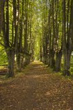 Gravel path leading trough alley. Gravel path leading trough green alley with high trees Stock Image