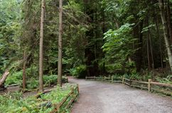 A gravel path with a wooden fence in a dense evergreen coniferous forest stock photos