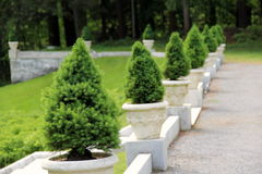 Gravel pathway with dwarf pine trees Stock Photos