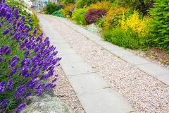 A gravel pathway between formal beds of lavender Royalty Free Stock Photography
