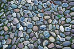 Gravel pavement covered with moss texture Royalty Free Stock Image