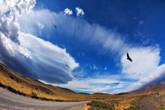 Gravel road  and Andean condors Royalty Free Stock Photography