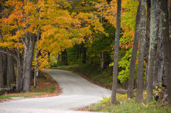 Gravel road through autumn woods Royalty Free Stock Images