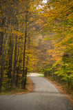Gravel road through autumn woods Royalty Free Stock Image