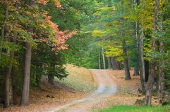 Gravel road through autumn woods Royalty Free Stock Photography