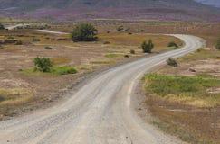 Gravel road through desert in bloom Stock Image