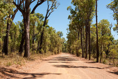 Gravel road. In the dry forest at midday Royalty Free Stock Photography