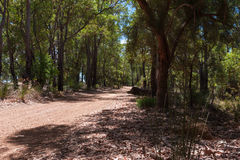 Gravel road. In the dry forest at midday Stock Photography