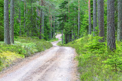 Gravel road in the forerst royalty free stock photo