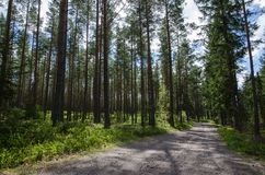 Gravel road into the forest Royalty Free Stock Photography