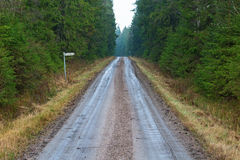 Gravel road in the forest Royalty Free Stock Photo