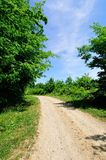 Gravel road through the forest Royalty Free Stock Photo