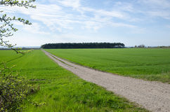 Gravel road by green fields. Gravel road surrounded of green fields in a rural landscape Stock Image