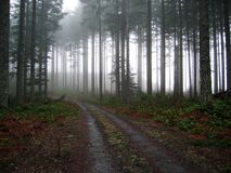 Gravel Road Into The Fog Royalty Free Stock Photo