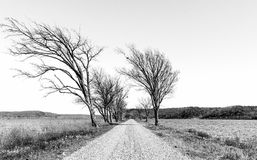 Gravel Road Through the Lake. Black and white gravel road lined with bare trees on either side leading off into the distance with sections of the lake on either stock images