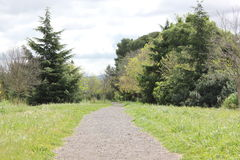 A gravel road leading into tall trees Stock Photography
