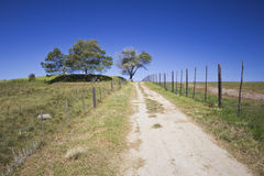 Gravel road leading up towards trees Royalty Free Stock Photo