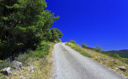 Gravel road lined with fir trees Stock Photo