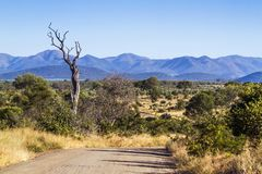 Safari gravel scenery in Kruger National park, South Africa. Gravel road in Malelane area Royalty Free Stock Photography