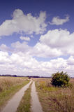 Gravel road between meadows. Royalty Free Stock Image