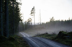 Gravel road by a misty evening. Winding gravel road through the woods by a misty evening Royalty Free Stock Images