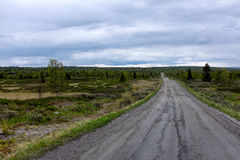 Gravel Road in norway, boreal forrest. Gravel Road in Norway through norway Royalty Free Stock Images