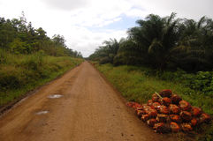 Gravel road at oil palm plantation Royalty Free Stock Image