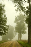 Gravel road old trees drown in morning fog Royalty Free Stock Image