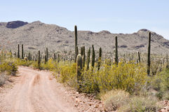 Gravel road, Organ Pipe Cactus National Park, Arizona Royalty Free Stock Photos