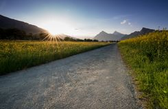 Gravel road parting a rapeseed canola field and a yellow wildflower meadow with the setting sun disappearing behind a beautiful mo. A gravel road parting a Stock Photo