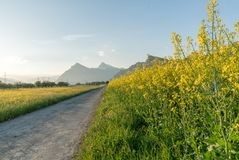 Gravel road parting a rapeseed canola field and a yellow wildflower meadow with the setting sun disappearing behind a beautiful mo. A gravel road parting a Stock Photography