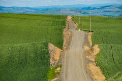 Gravel road passing through green wheat fields of Eastern Washin. Gravel road passing through wheat fields in Palouse region of eastern Washington state Royalty Free Stock Photos