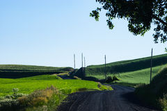 Gravel road passing through green wheat fields of Eastern Washin. Gravel road passing through wheat fields in Palouse region of eastern Washington state Royalty Free Stock Photo