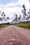 Gravel road and pines. Royalty Free Stock Images