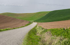 Gravel road through rolling wheat fields Stock Photography
