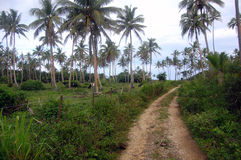 Gravel road at rural area. South Pacific, Kingdom of Tonga Stock Photo