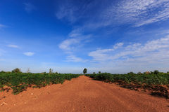 Gravel,road,sky. Unfenced stretch of dirt road stretch to the sky Royalty Free Stock Image