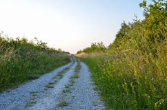 Gravel road at summer in lush vegetation Royalty Free Stock Images