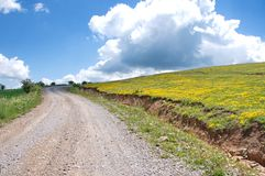 Gravel road winding through the green and yellow meadows. Panoramic scenes of the Pester plateau, karst region in southwestern Serbia. It situated in the area of royalty free stock photo