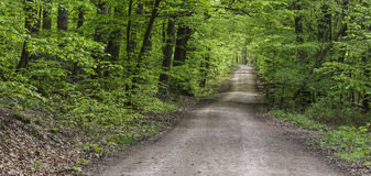 Gravel road through the woods Royalty Free Stock Photography