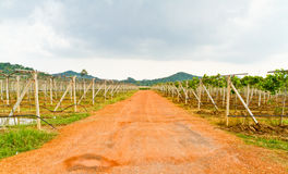 Gravel roads in the vineyards Stock Photo